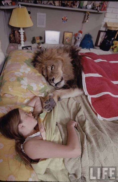 A Pet Lion????