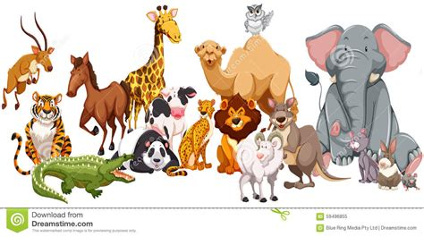 Different Kind Of Wild Animals Stock Illustration Image: 59496855