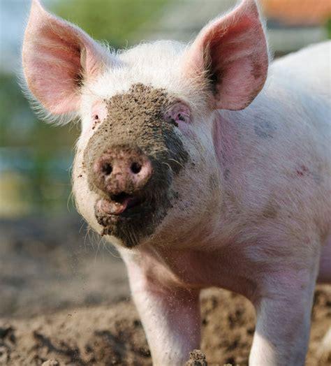 13 Animal to Human Diseases Kill 22 Million People Each Year