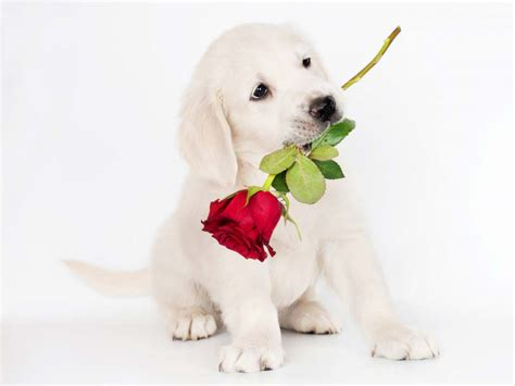Cute Puppies and Dogs Images ~ Allfreshwallpaper