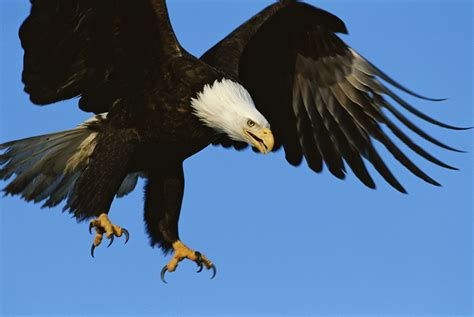 Lets Not Force Eagles to Fight Rogue Drones