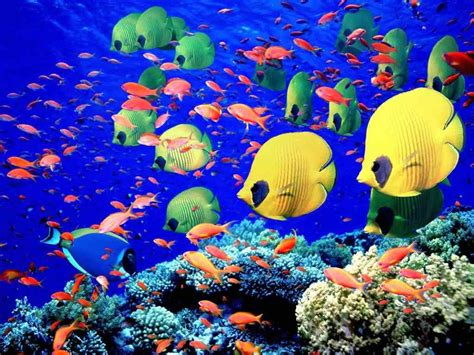 Red Sea diving Holidays Snorkeling Trip Egypt Tours