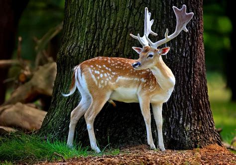 HD Animal Wallpapers: Beautiful Animals Wallpapers