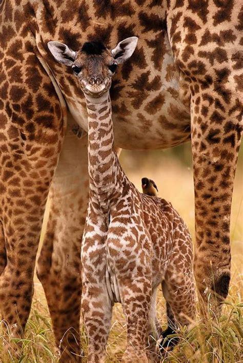 Beautiful Animals Safaris: Safari Amazing ! Beautiful