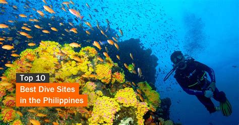 Top 10 Best Dive Sites in the Philippines Tourist Spots