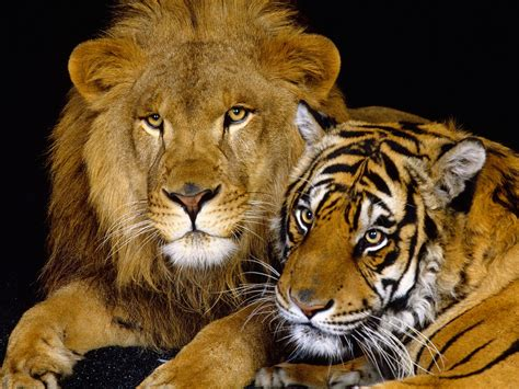 Animals love photos: Animals wallpapers