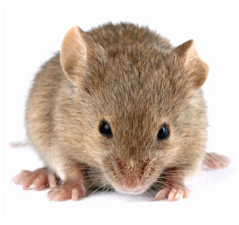 Commercial Property Pest Control NJ Exterminator All