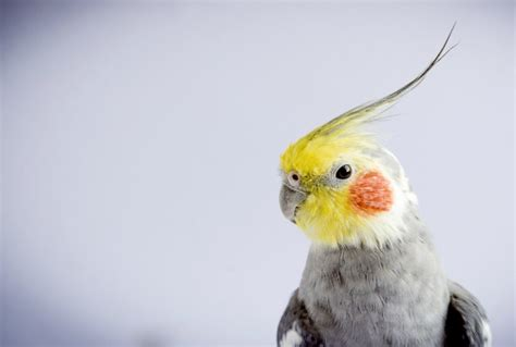 10 Home Dangers for Pet Birds petMD