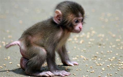 Cute Monkey Quotes QuotesGram