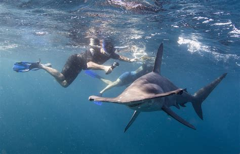 Cabo Shark Dive, Swim with Sharks in Cabo, Snorkel with Sharks