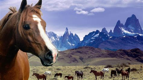 Horse Desktop Wallpaper Themes WallpaperSafari
