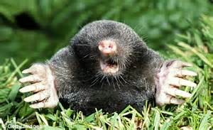 Cute Moles Animal images