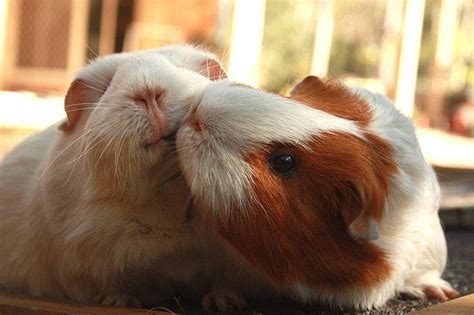 50 Cutest Animal Couples Showing Us What True Love Is!