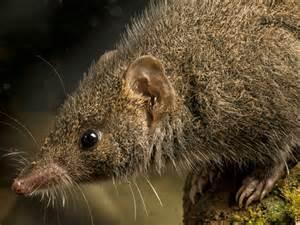 Pics Photos New Species New Found Species Top 10 New