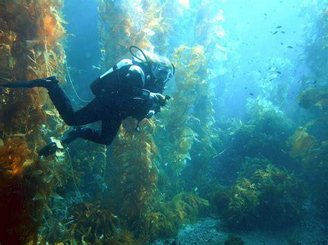 Central and South America Best Dive Sites Just A Platform