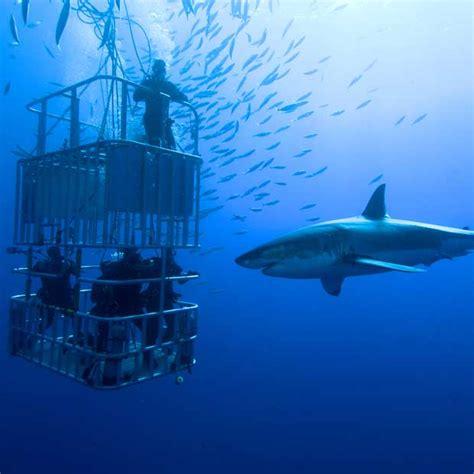 Shark Diving Holidays Dive Worldwide