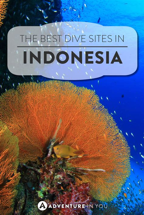 Best Scuba Diving in Indonesia: Dive Sites You Can't Miss