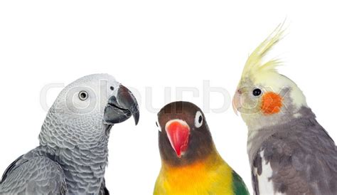 Three differents tropical birds isolated on a white