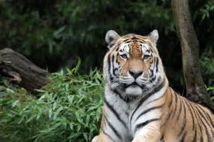 What Do We Know About Endangered Animals? • Capital OTC