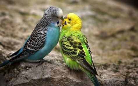 wallpapers: Love Birds Desktop Wallpapers