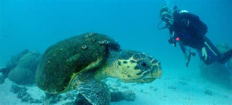 Sail Ningaloo Ningaloo Reef Diving Sail & Dive Tours