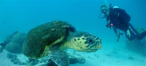 Australia Scuba Diver's Dream Trip Tap Toe