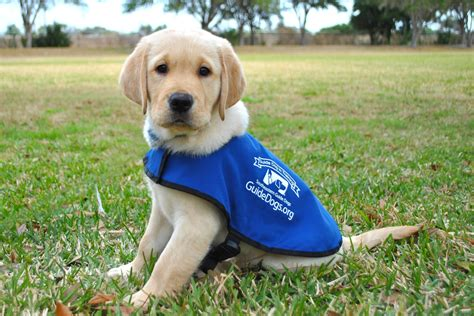 Puppies! Hug 'Em in Florida at Southeastern Guide Dogs