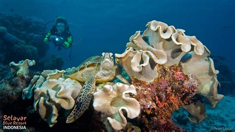 Dive Sites Indonesia south Sulawesi Selayar Dive Resort