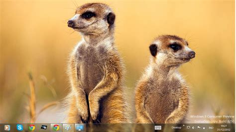 Free Download Windows 8 Themes: African Wildlife theme