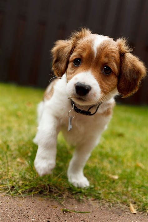 25 best ideas about Cutest dog breeds on Pinterest