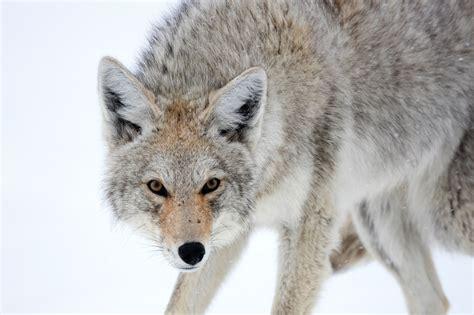 Animal Images impremedianet