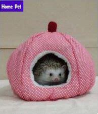 CritterWARE® Groom N Kit for Small Animals PetSmart