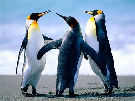 Penguins Habitat Population and Type Penguins