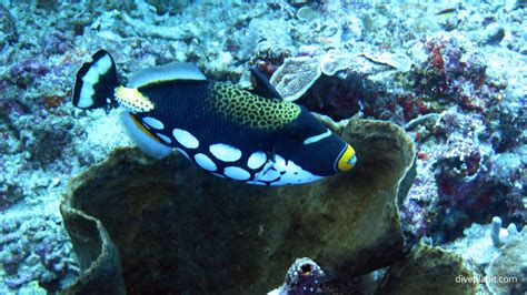 Bunaken Island Dive Sites Sulawesi Indonesia