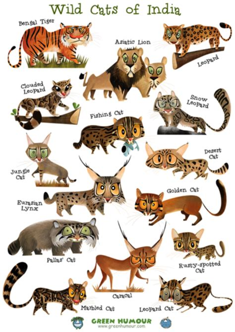 Indian Wild Animals Pictures With Names