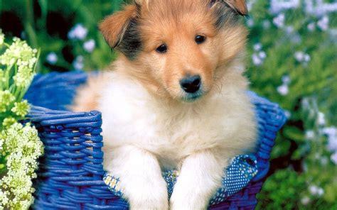 Puppy World: Cutest Puppy Photos