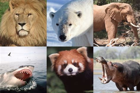 What does the term 'endangered species really mean