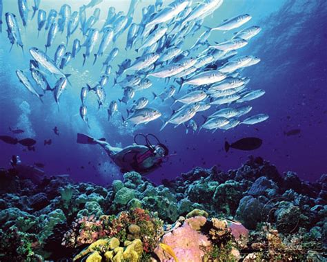 Scuba Diving in Australia Dive The World Vacations