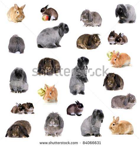 Group of different breeds of rabbits by Marina Jay, via