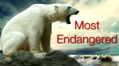10 Critically Endangered Animals YouTube