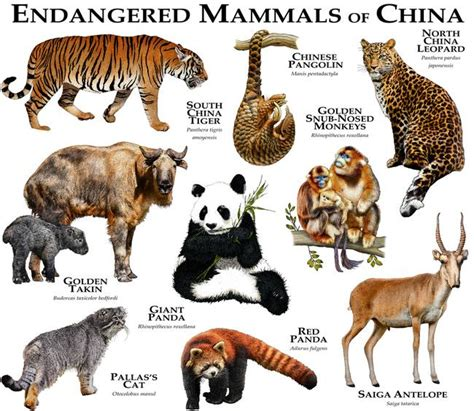 Endangered Animals With Names And Information