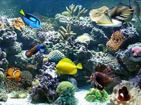 Types of Saltwater Aquariums The Aquarium Setup, Filtration, and Maintenance Site