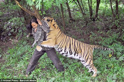 Siberian Tiger Vs Bengal Tiger Hot Girls Wallpaper