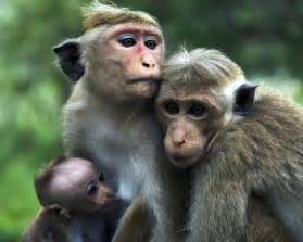 Monkey Animal Wildlife
