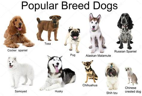 Verschillende rassen van honden samen — Stockfoto