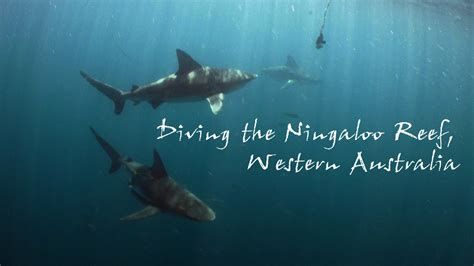 Diving the Ningaloo Reef, Western Australia YouTube