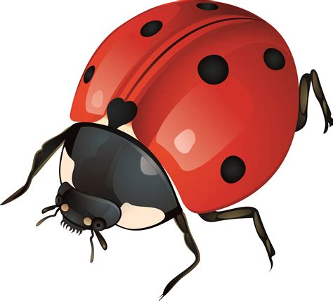 Ladybug clipart gambar Pencil and in color ladybug