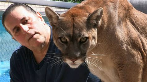 Cougar Man: Living With A Mountain Lion YouTube