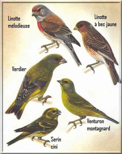 Different Kinds Of Birds With Names