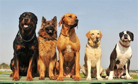What Breed Is My Dog: Determining Your Dog Breed
